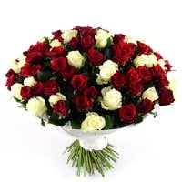 101 red-and-white roses