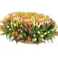 Bouquet 501 tulips