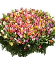Bouquet 1001 tulips!