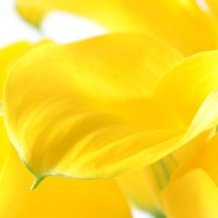 Bouquet Yellow_sea