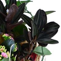 Order the arrangement of plants in our online shop. Delivery!