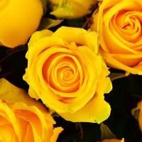 Buy a great bouquet of yellow roses - the sunny gift