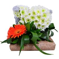 Buy flower toy «Sheep» with delivery
