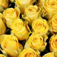 Buy extraordibary bouquet «111 yellow roses» with delivery
