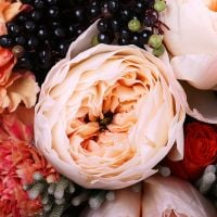 Buy sophisticated flower bouquet «Peach Sorbet» with delivery