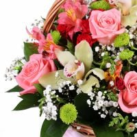 Buy delicate orchid bouquet in basket �Pastel Mix� with the best flower delivery