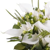 Buy a beautiful bouquet of callas and freesia with delivery