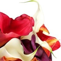 Order a bouquet of bright ''Mix of callas'' in online store