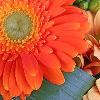 Order orange bouquet of ''Autumn mix of 11 flowers'' with delivery