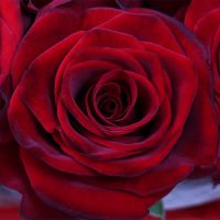 Order romantic red rose bouquet «Carmine Surprise» with delivery to any city