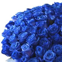 Bouquet of 101 blue rose with delivery