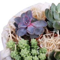 Product Garden of Succulents