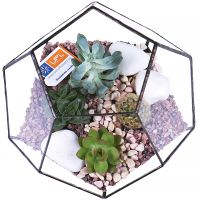 Order florarium «Beauty geometry» with delivery to any city!