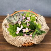 Order flower composition «Blessing of nature» in our online shop