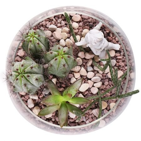 Succulents in Aquarium - order with delivery