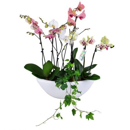 Buy arrangement 'Basket of orchids' in a pot with delivery