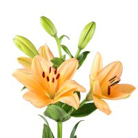 Bouquet Lily orange by the piece