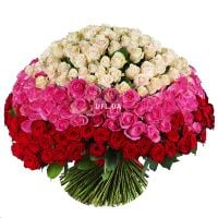 Order bouquet �Magic ball of 303 roses� in the internet-shop UFL.