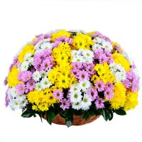 Bouquet «For Birthday» | order now on UFL