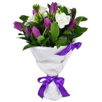 Buy spring flower bouquet «Snowdrop» with delivery