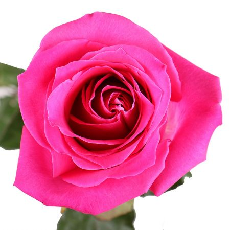 Buy marvelous bouquet «Premium pink roses by the piece» with delivery