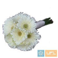 Bouquet �hamomile cloud