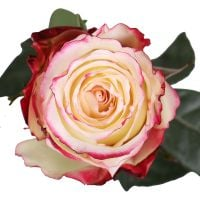 Buy tender bouquet «Sweetness premium roses by the piece» with delivery