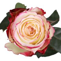Buy tender bouquet �Sweetness premium roses by the piece� with delivery