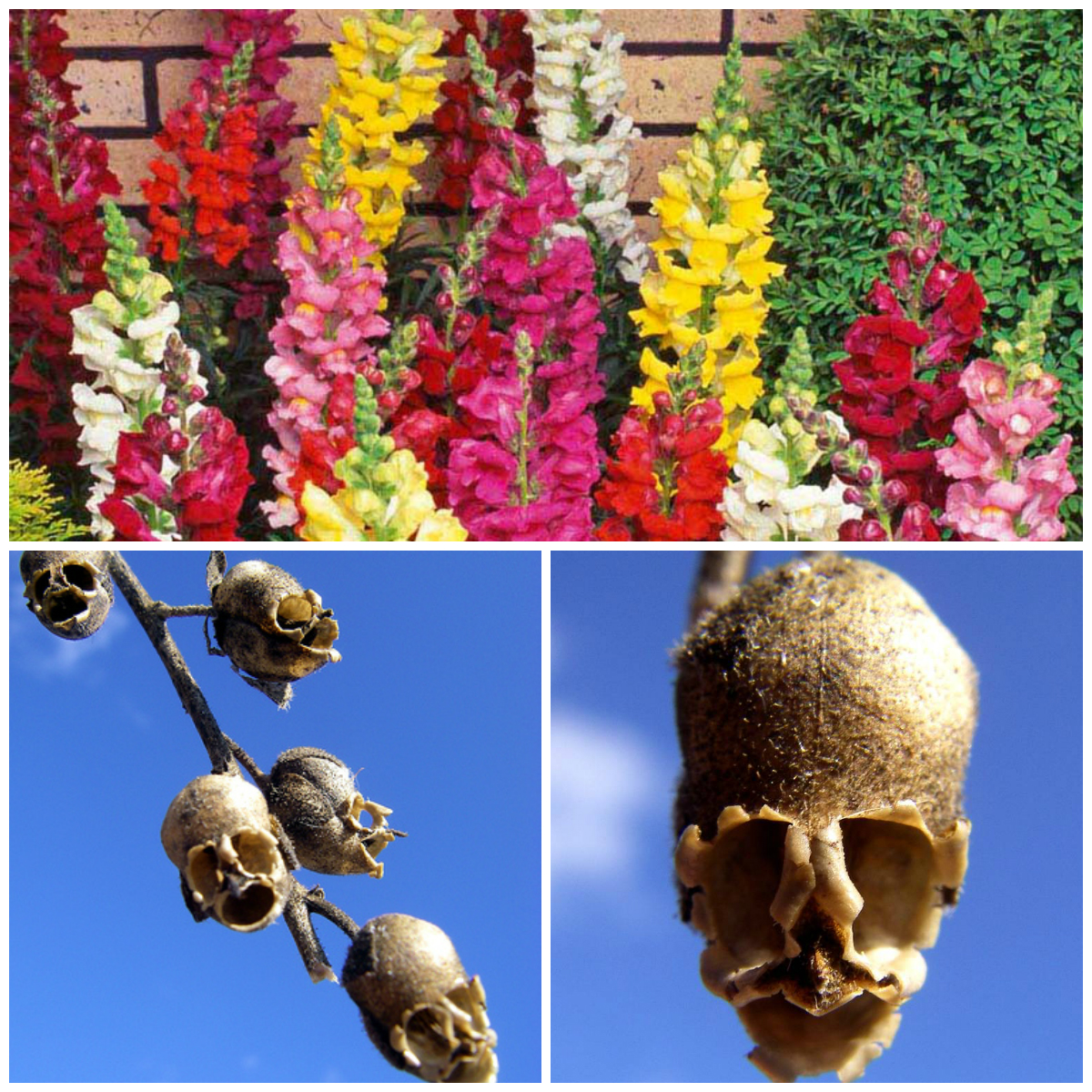 Flowers with the most unusual forms
