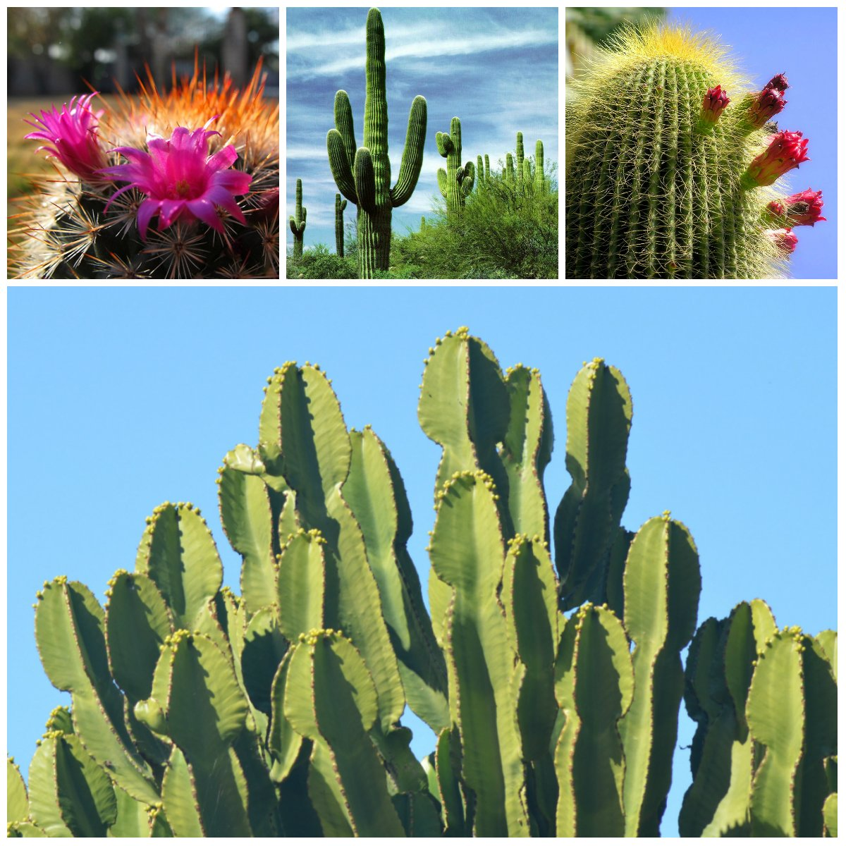 Unknown cactus: 6 interesting facts