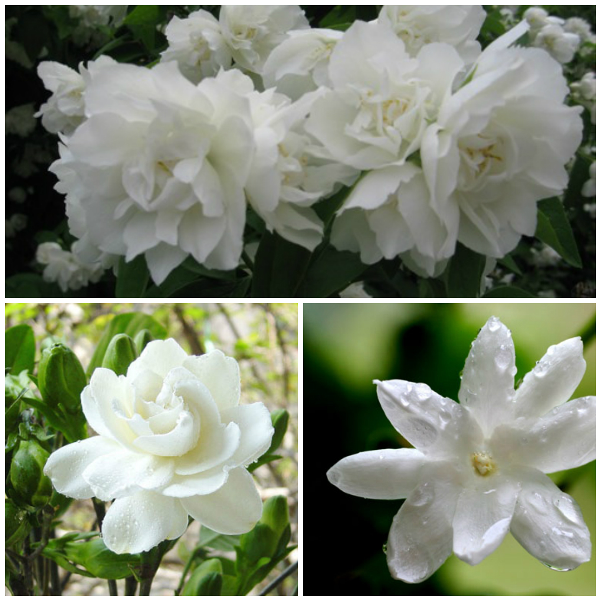 10 of the most fragrant flowers in the review see photos in full size mightylinksfo