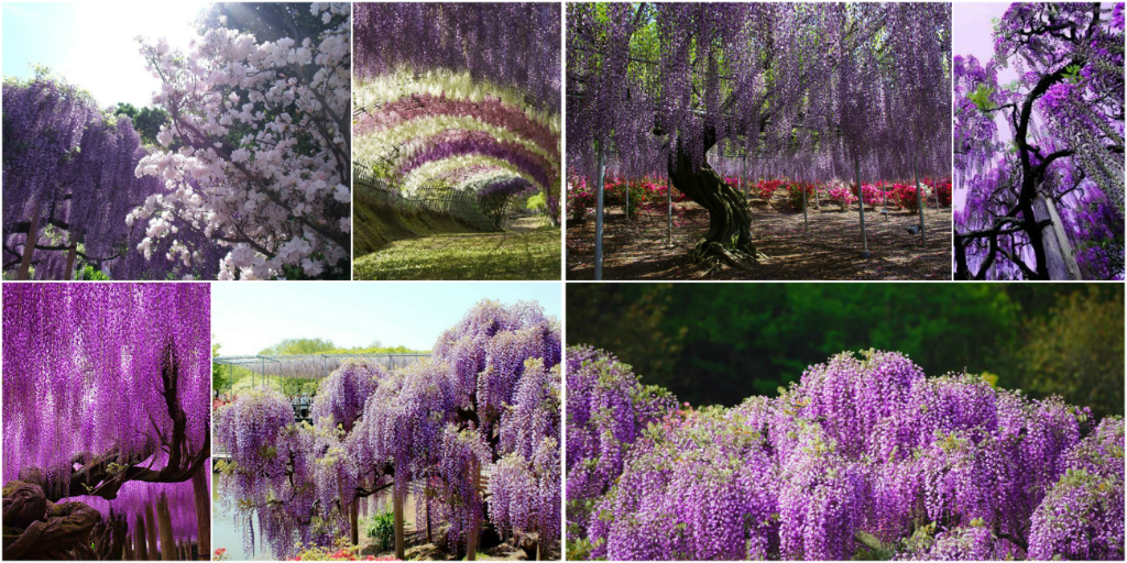 The Most Beautiful Gardens Of World