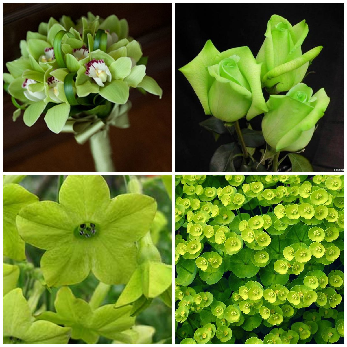 Green flowers are the best anti-stress