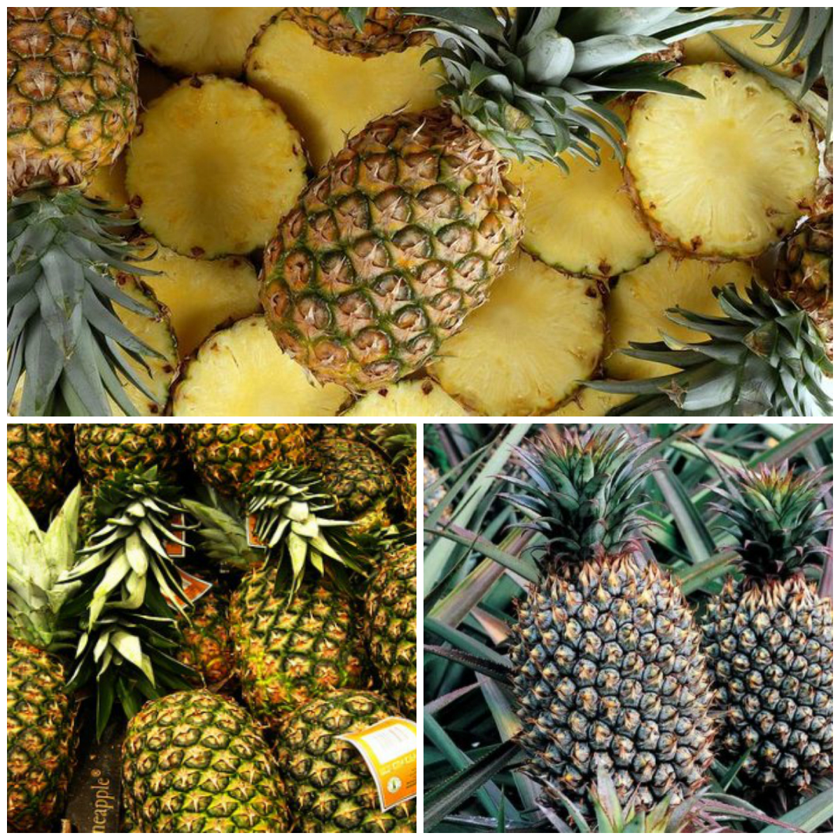 growing a pineapple at home. Black Bedroom Furniture Sets. Home Design Ideas