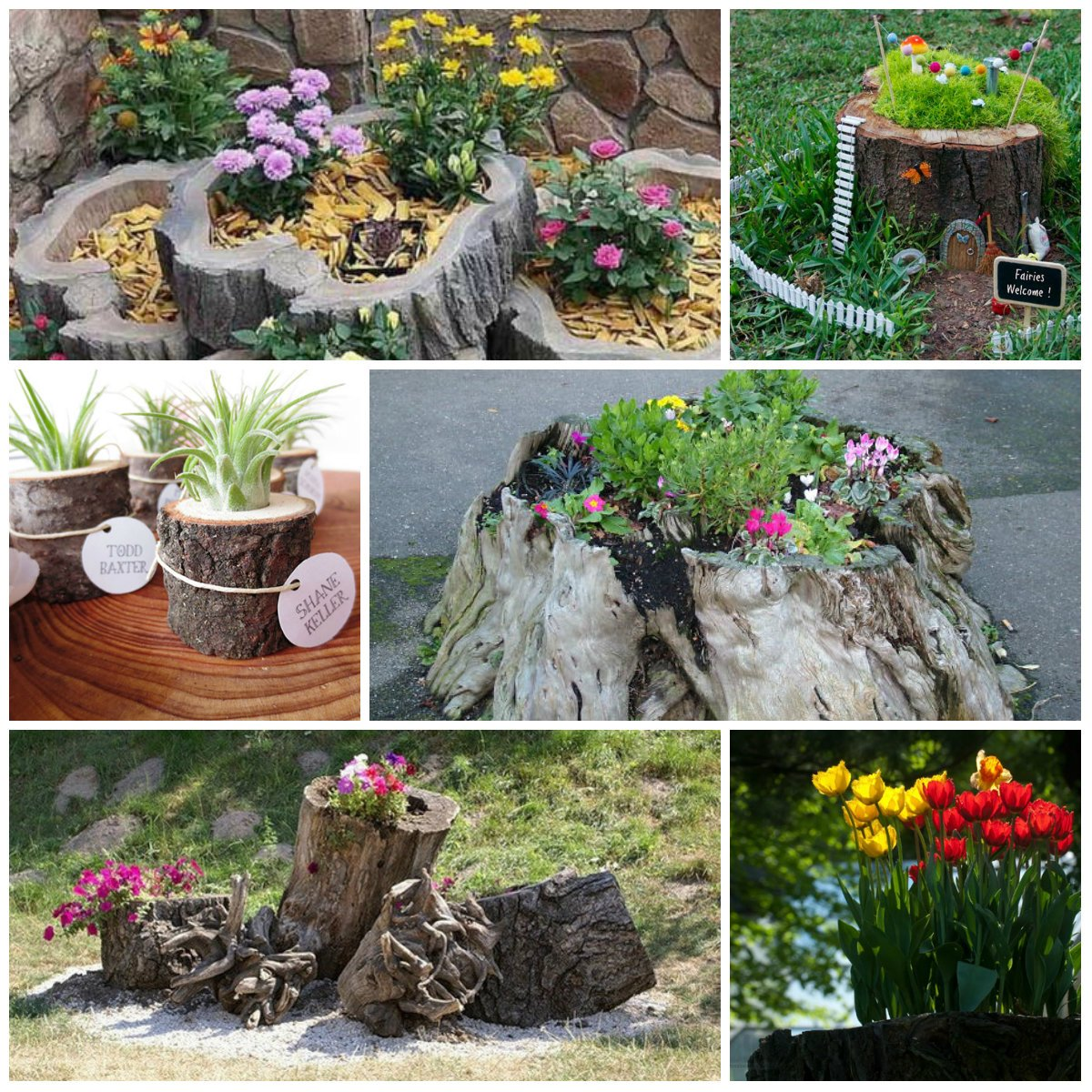 Flower stump in the garden for How to decorate garden