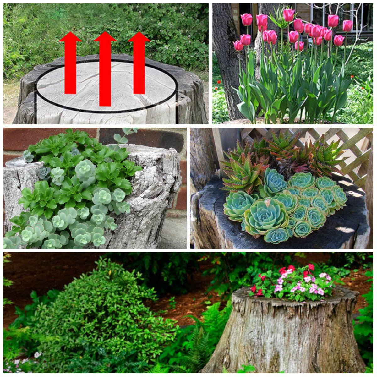 What Are The Best Flowers To Decorate A Tree Stump In The Garden?