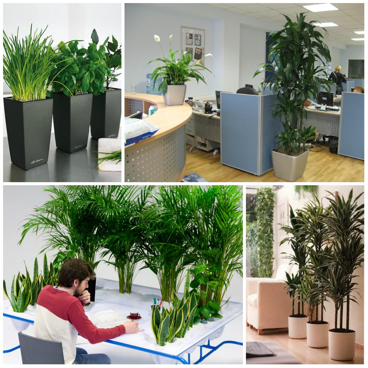 7 Best Plants For The Office