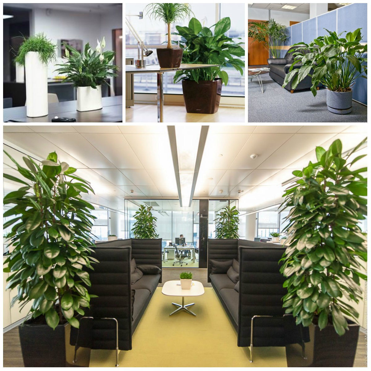 useful plants for the office
