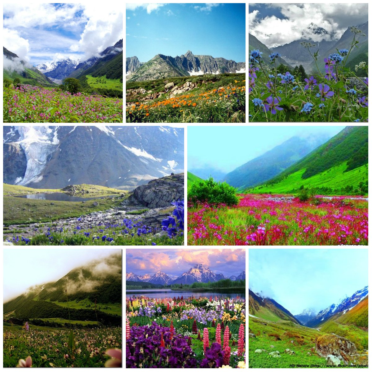 Valley of Flowers a Magnificent Park in India